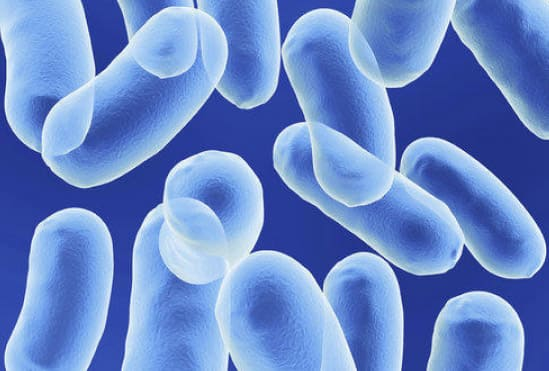 Uses of probiotic yeast S.Boulardii in human health
