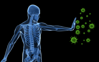 How Probiotics support your immune system?