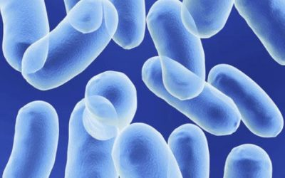 History and Benefits of a Soil Based Probiotic: Bacillus Coagulans SNZ 1969